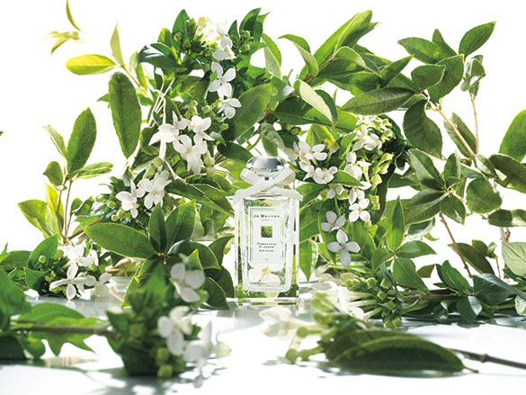 Summer Scents: Top 5 Fragrances