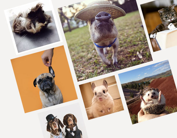 10 Cutest Animals on Instagram
