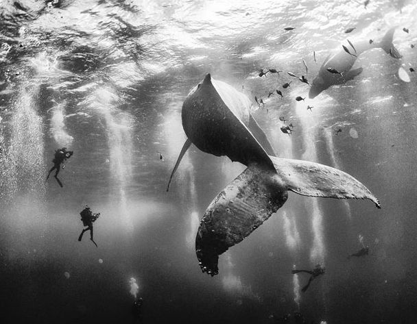The 2015 National Geographic Photo Contest Winners
