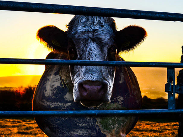 Cowspiracy must-watch documentaries