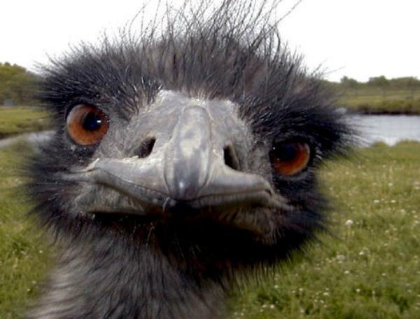 Ostrich selfie