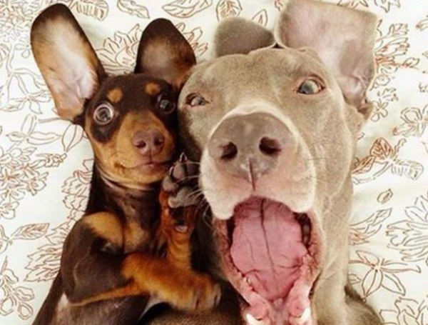 Pet selfies dogs