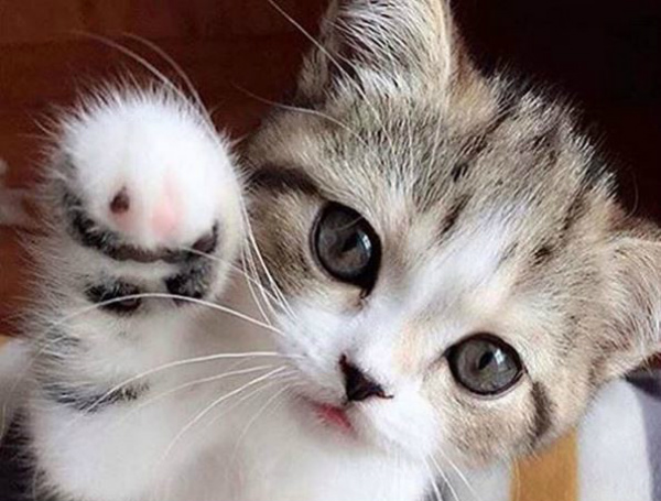 Pet selfies kitten