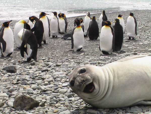 Seal and penguins selfie