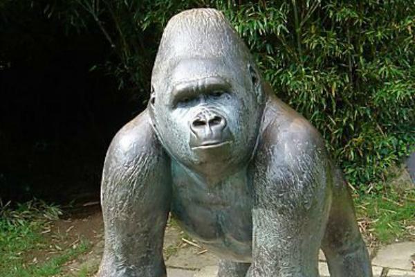 Jambo Jersey Zoo