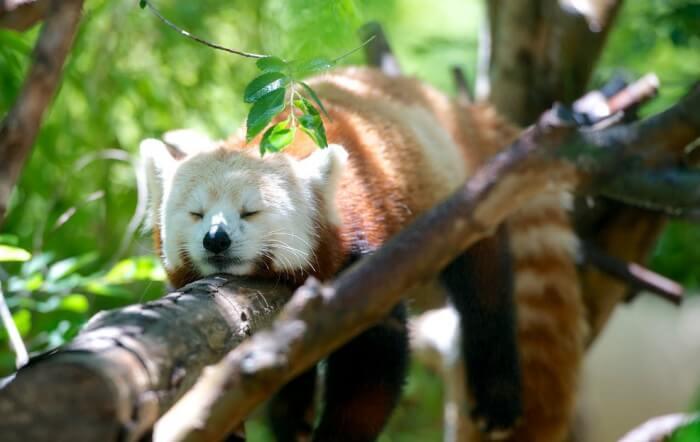 World Sleep Day tips