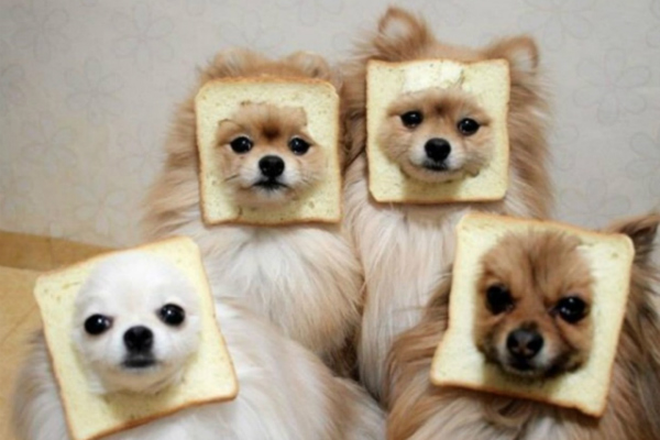 Bread-dog-family