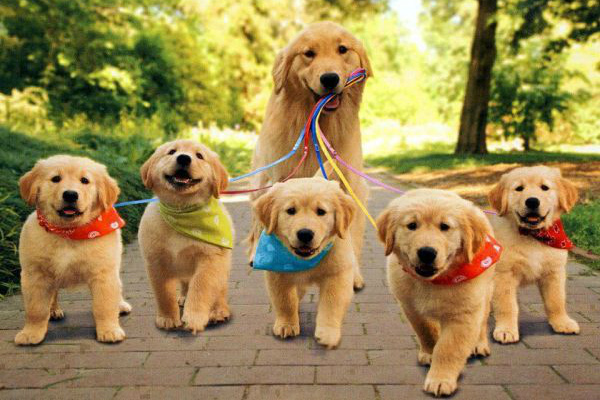 Dog family walk