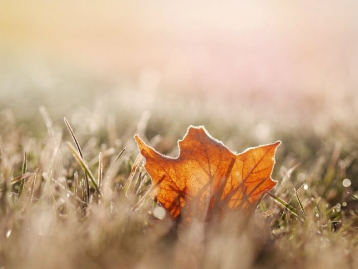 Autumn leave hygge