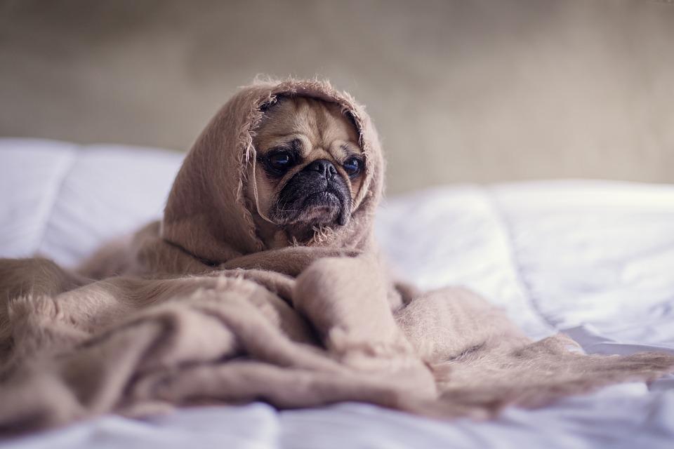 pug-warm