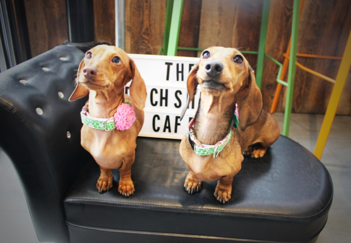 dachshund-dog-cafe-london-2