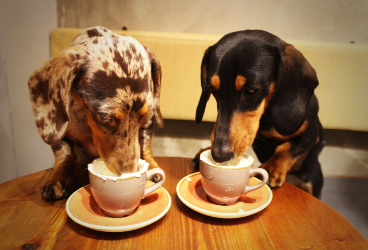 dachshund-dog-cafe-london-3